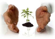 The photo shows a pair of hands cupping a newly sprouting tree implying a new start, for example starting a new job.